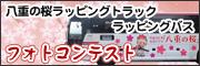 八重の桜ラッピングバス・トラック写真コンクール